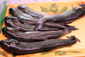 black fish at Seafood USA
